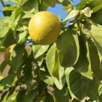 fruits réduit